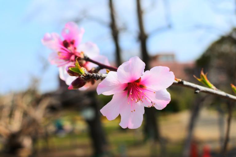 春に咲く季節の花々!