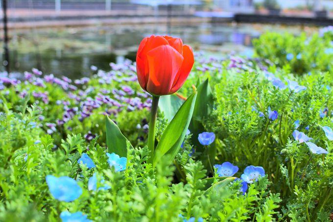 家族で訪れたい!季節の花々が堪能できる「大船フラワーセンター」