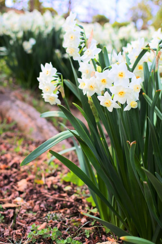 冬から春に咲く季節の花々!