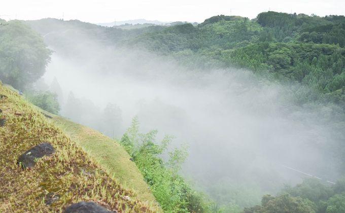 濡れた岡城の石垣とみずみずしい苔や花