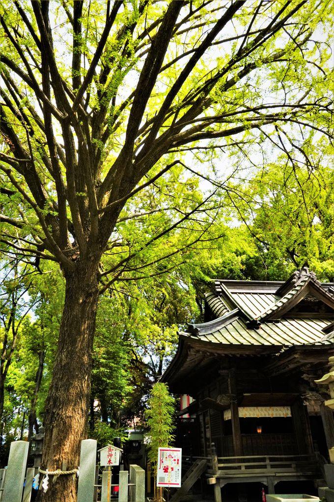 中央を守護する「金龍」と龍木