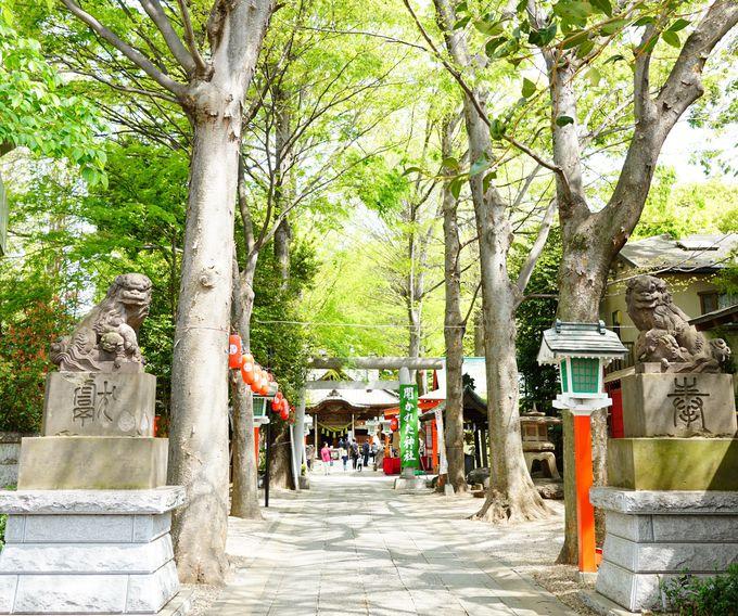 五龍神だけではない!多種多様な御祭神をお祀りする神社