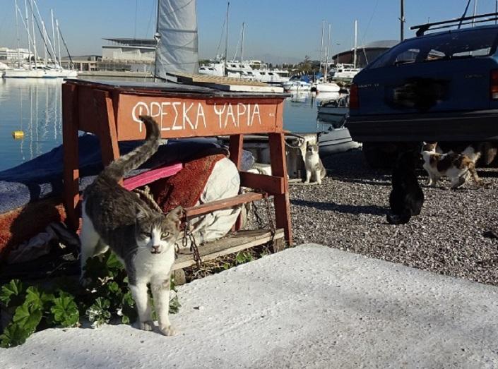 海を愛するギリシャ人 お洒落なヨットハーバーは憩いの場