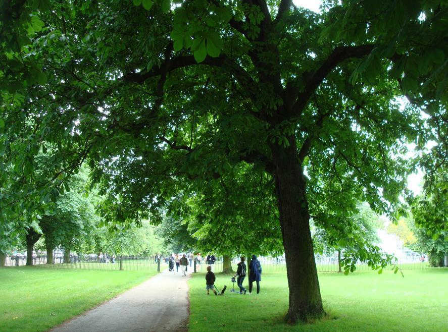 ロンドン中心地にいるのを忘れそう!緑ゆたかな王立公園