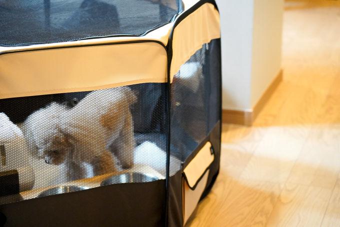 ペットと泊まれる2棟の客室