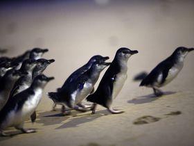 オーストラリアのおすすめ子連れスポット10選 親子で大自然を満喫!