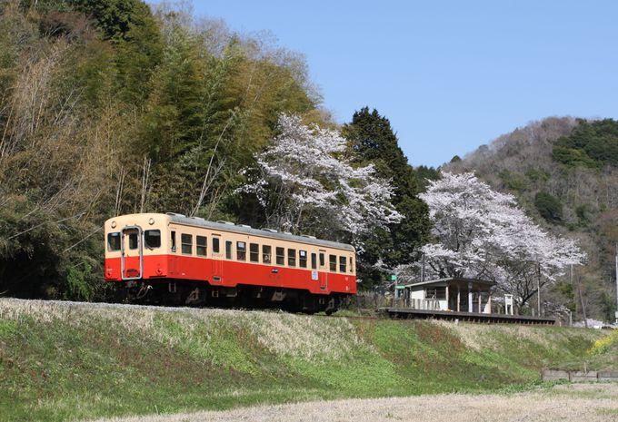 小湊鐵道で一番のロケーション!桜と菜の花とローカル線を…