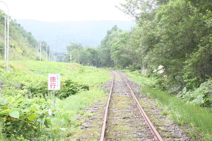 草原や白樺林を駆け抜ける〜北海道の大自然を満喫!