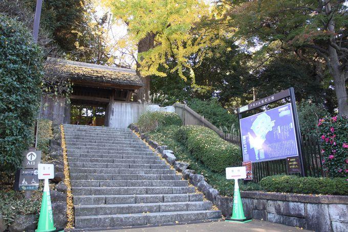 銀杏の大木がお出迎え…歴史公園の入り口は茅葺門
