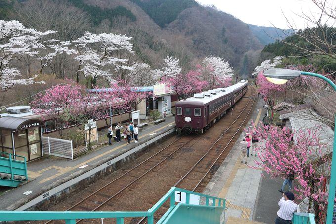 花桃が咲き誇る桃源郷〜神戸(ごうど)駅はおススメの撮影スポット