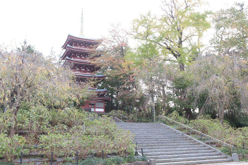 戦国時代の巨大城郭遺構…千葉県松戸市小金城趾を探索しよう
