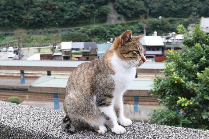 まずは猫村ホウトンの駅猫を…