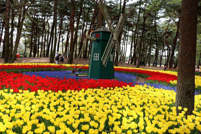 いろいろな花が楽しめる!
