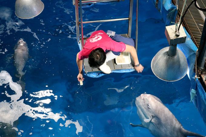 バックヤードを探検!「水族館体験ツアー」