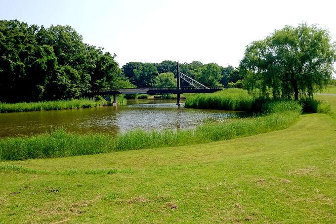 広大で自然豊かな公園