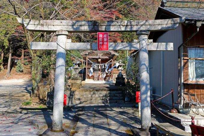 賀茂別雷神社について