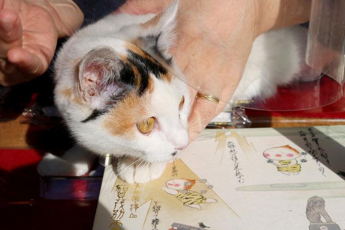 看板猫と神社のアイドル