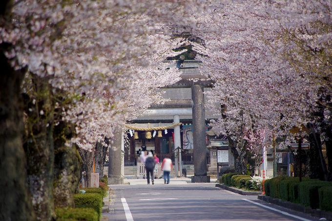 「那須 乃木神社」について