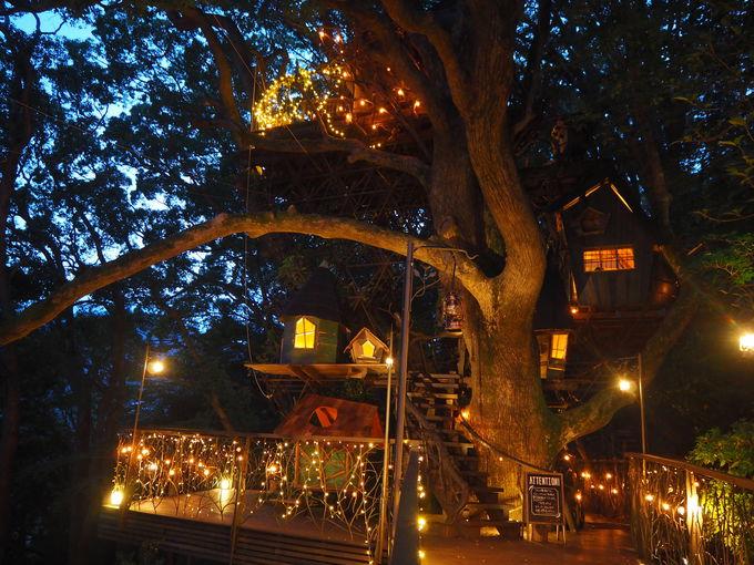 夜の森でフルーツバーベキュー