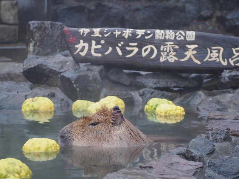 伊豆 シャボテン 動物 公園