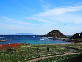岬に一足早い春到来!300万本が香る「伊豆下田水仙まつり」