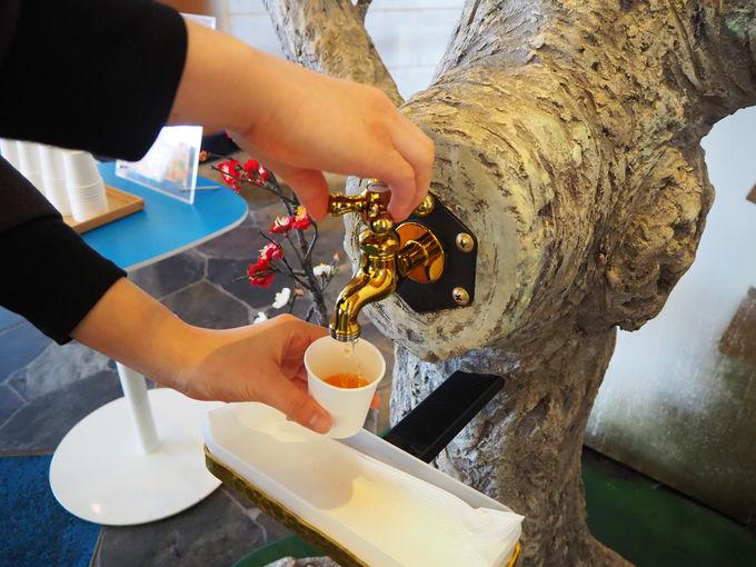 えっ?!梅ジュースの木