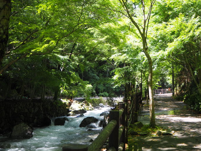 緑と渓流の美しいコントラスト