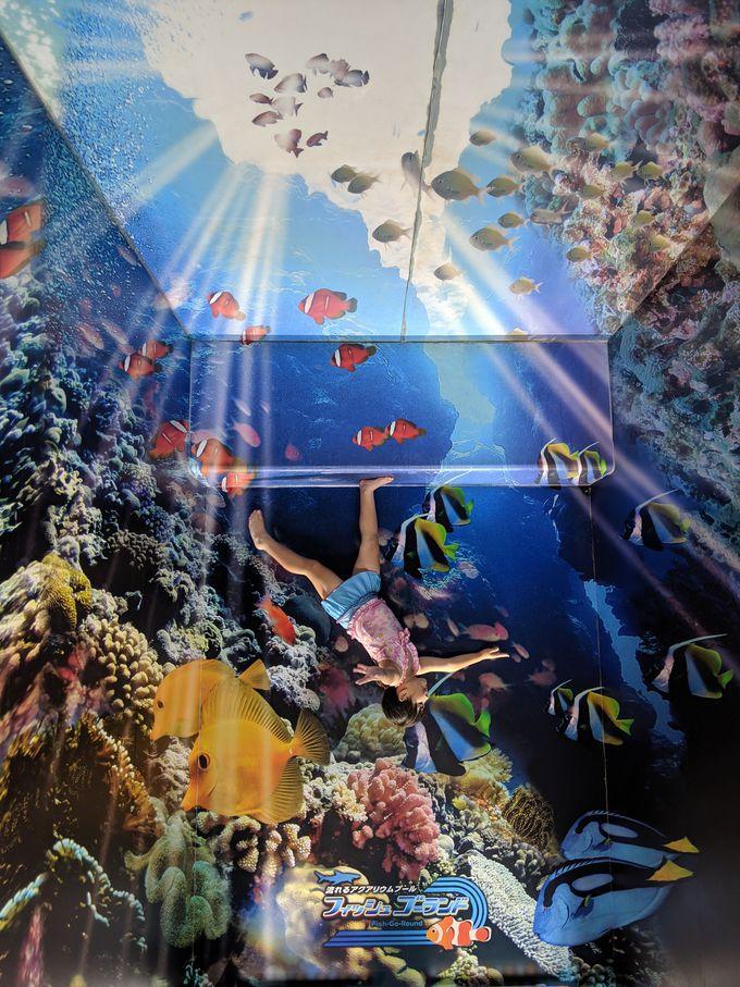 インスタ映え必死の海底写真館