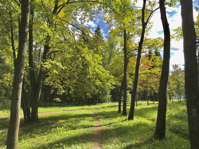 豊かな自然公園でリラックス