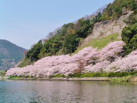 琵琶湖・海津大崎の桜並木とロテル・デュ・ラクのヴィラステイ