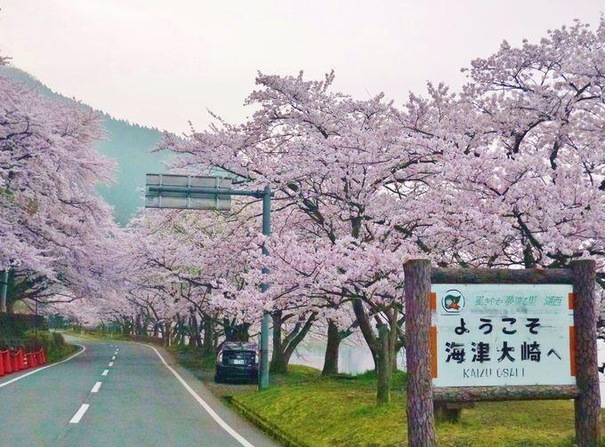 マキノ駅から海津大崎の入り口まで