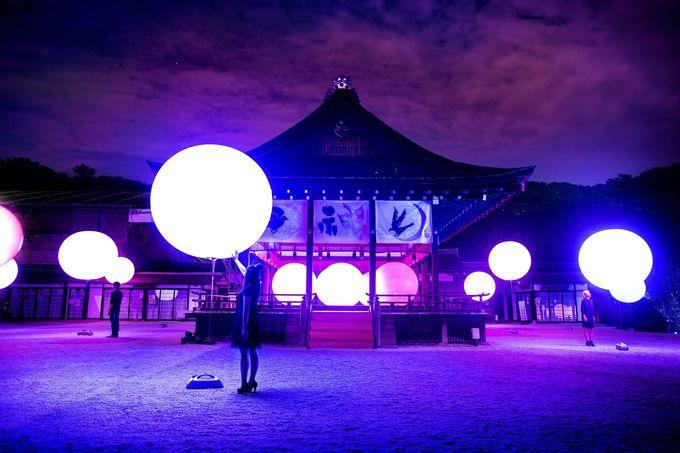 「下鴨神社 糺の森の光の祭」は、そこにいるだけで他者を感じることができる空間