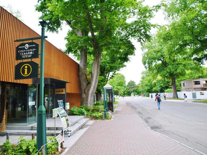 札幌駅周辺観光スポット「北海道大学」