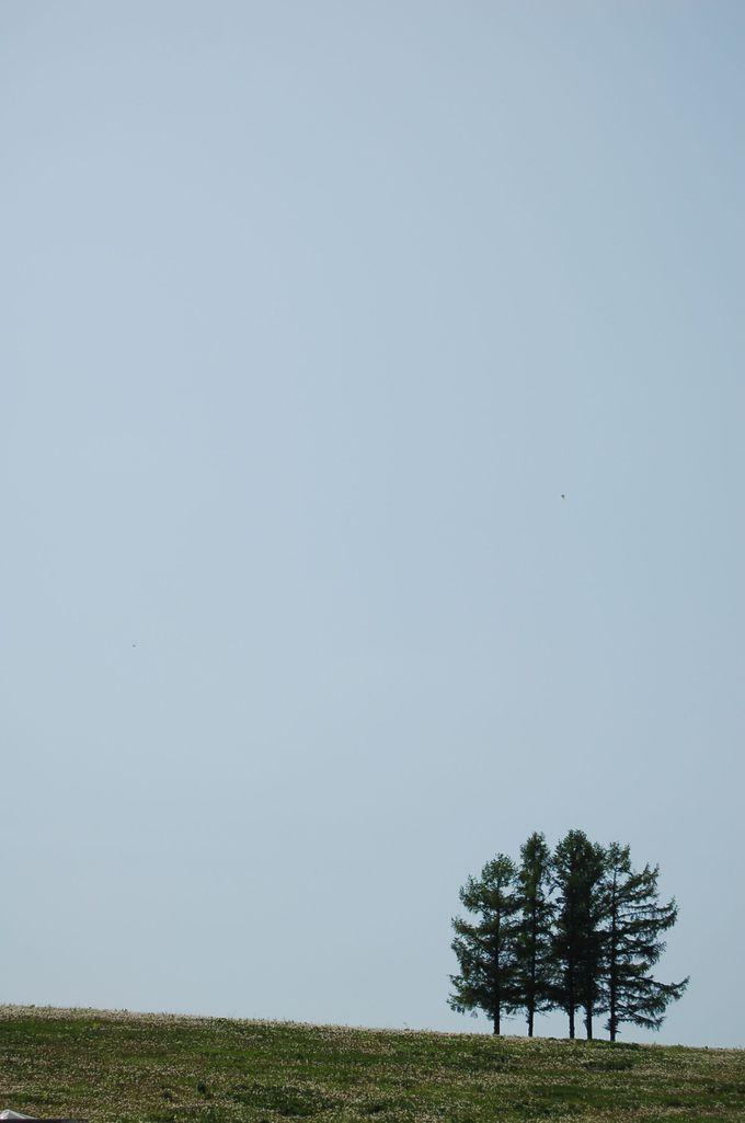 今一番ホットな木、「嵐の木」を探しに237号線を走る