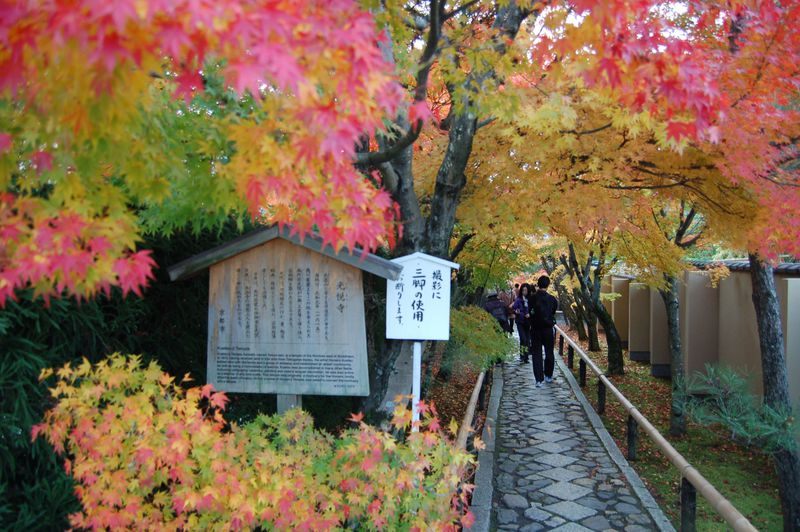 京都・鷹峯の紅葉は3つの人気のお寺を一気に回れて高効率!