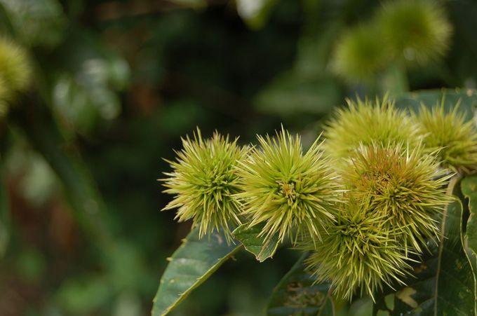 神鍋高原の自然豊かな散策路