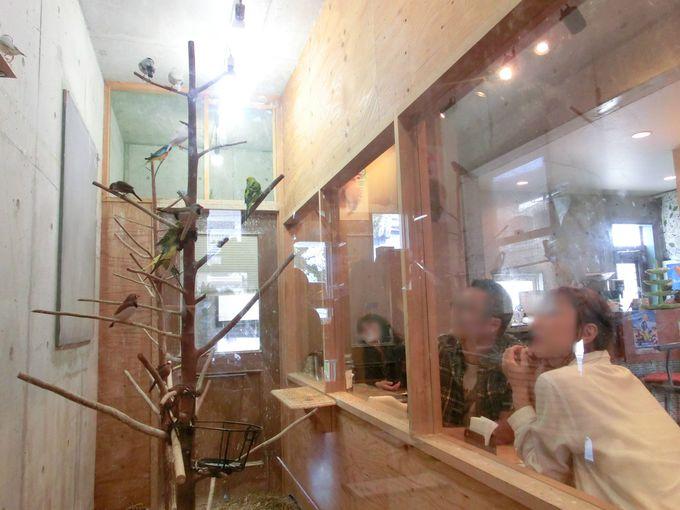 インコを見ながらカフェタイム