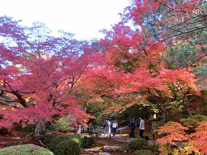 茶室から眺める紅葉