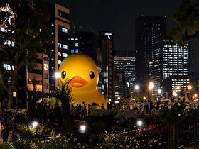 大阪にラバーダックが帰ってくる!世界を旅する巨大アヒルに会いに行こう!