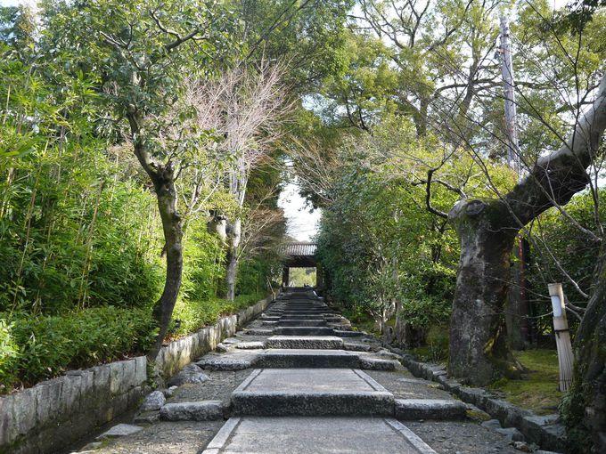 冬の高台寺のお楽しみ
