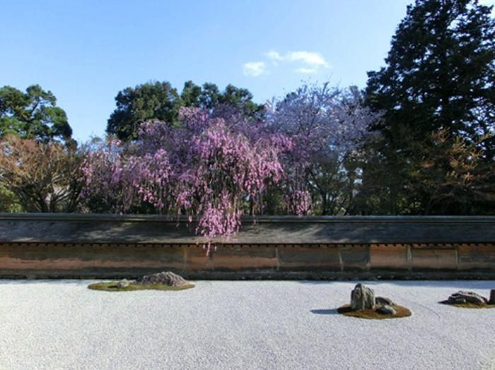 金閣寺から徒歩20分:龍安寺