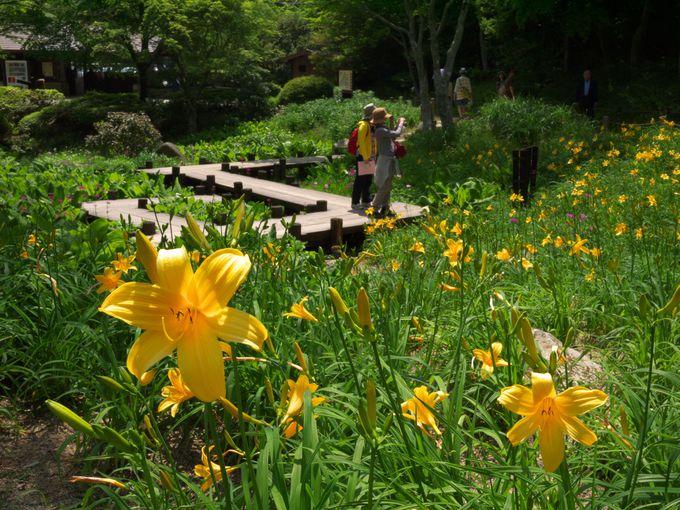 9.六甲高山植物園