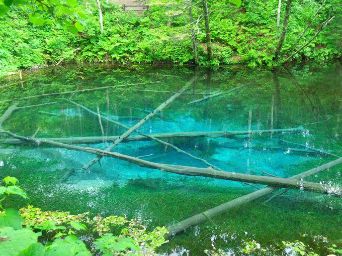 思わず息を呑むコバルトブルー!妖精が棲んでいそうなパワースポット「神の子池」(北海道)