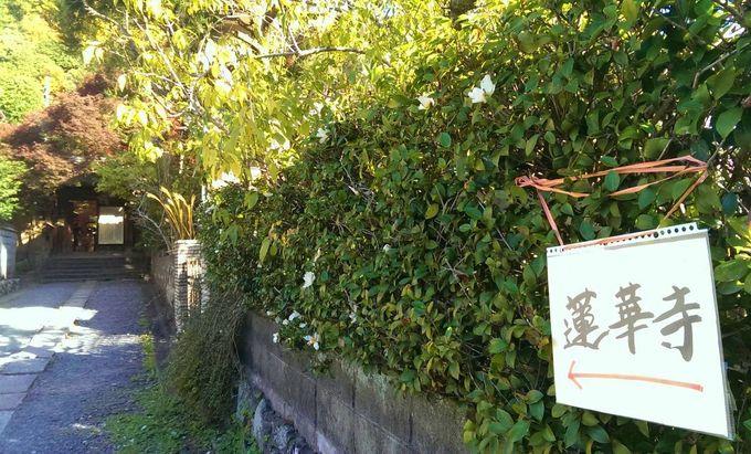エッ?ここが紅葉の名所・蓮華寺?