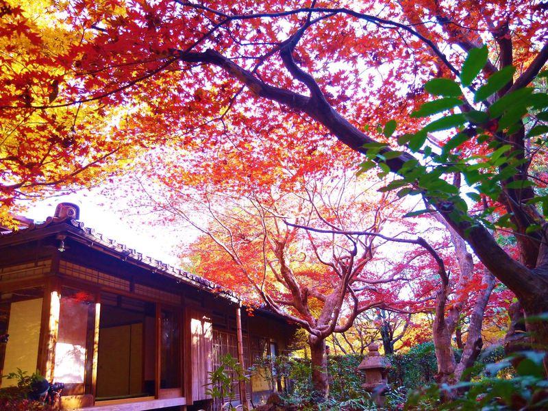 京都嵐山「厭離庵」で撮る見頃の紅葉!散りもみじの撮影ならココ
