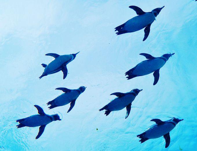 ペンギンがビュンビュン飛ぶ「森きらら(長崎)」