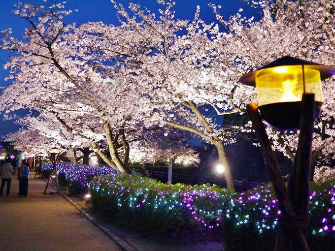 桜を美しく演出