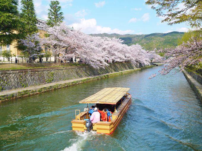 水面近くの桜に手が届きそう!