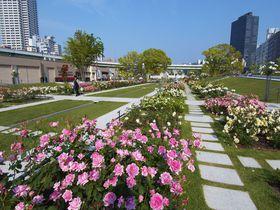 大阪のど真ん中・中之島公園バラ園は、船からも対岸のカフェからも楽しめる