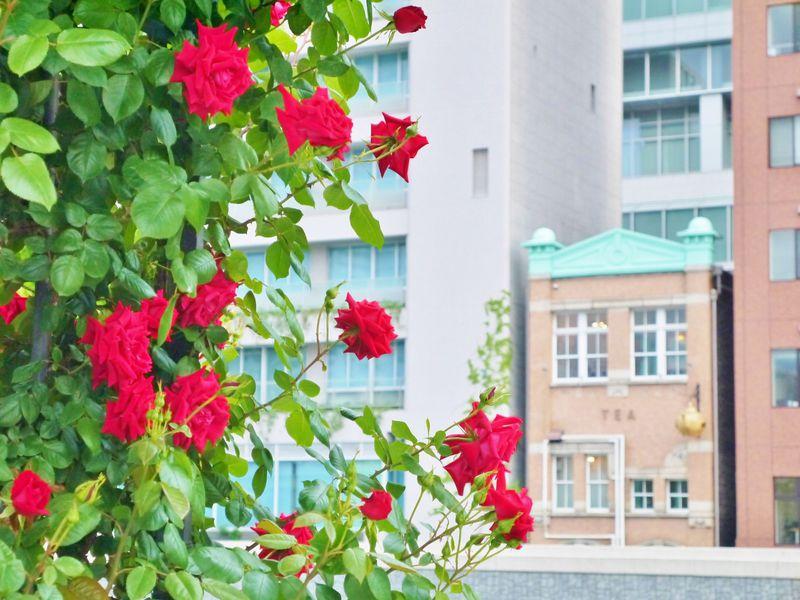 水都大阪・中之島〜北浜エリアのおすすめ水辺のカフェ5選